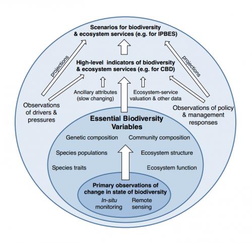 Essential Biodiversity Variables