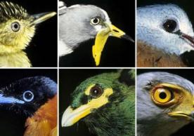 New lab study: Changes in birds' ranges may greatly affect ecosystems